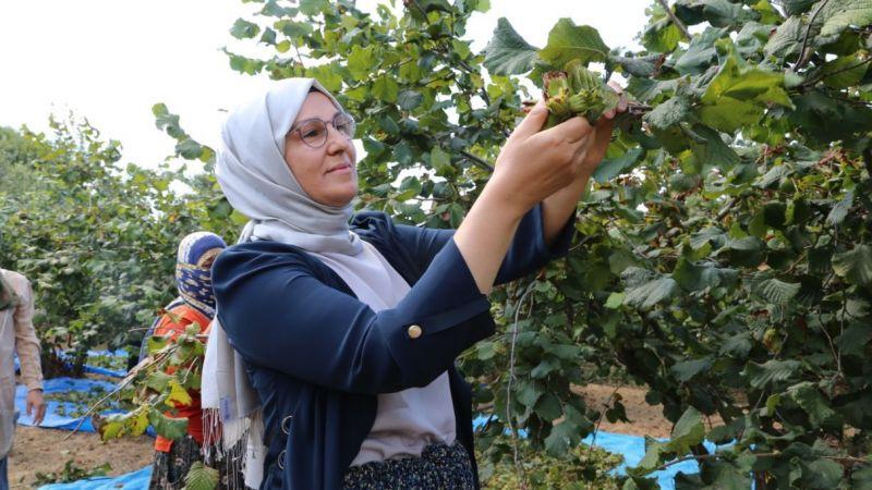 Katırcıoğlu, mevsimlik tarım işçileriyle fındık topladı