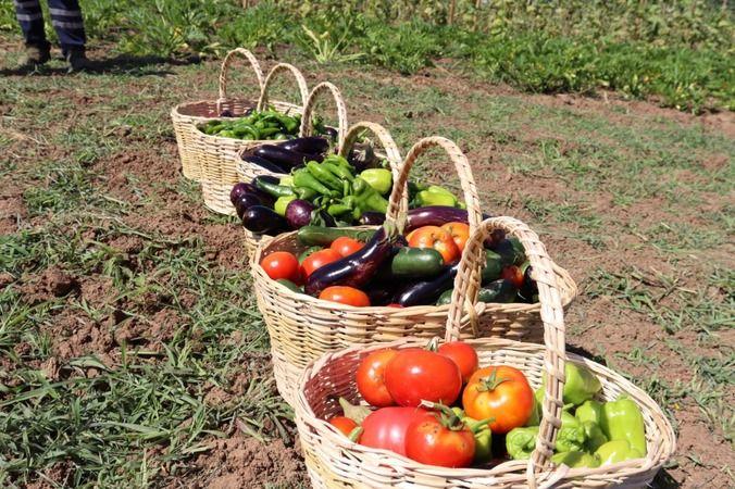 Tarımsal Üretim Bahçesi'ndeyazlık bakımlar sürüyor