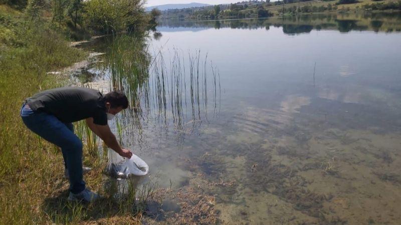 Kandıra'da göllere 64 bin adet yavru sazan balığı bırakıldı!