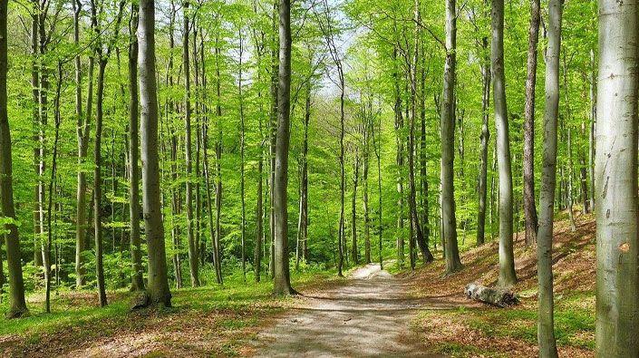 Kocaeli'de ormanlara giriş yasağı kısmen kaldırıldı!