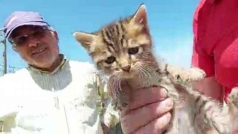 Otomobilden kurtardıkları yavru kediyi sahiplendiler
