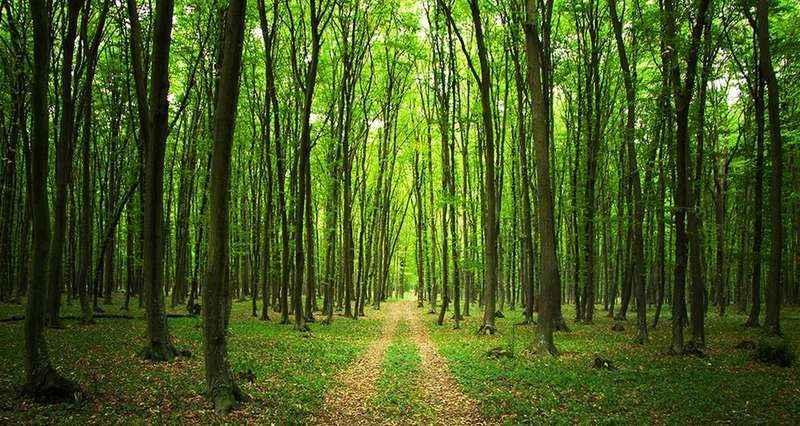 Orman Genel Müdürlüğü 2080 geçici, 3 daimi işçi alımı yapacak