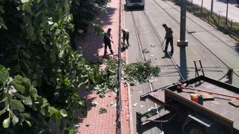 Tramvay hattına zarar verebilecek dallar budandı