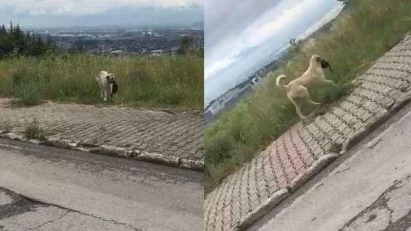 Hırsız köpek çantayı alıp kaçtı! Yoldan geçen vatandaş fark etti