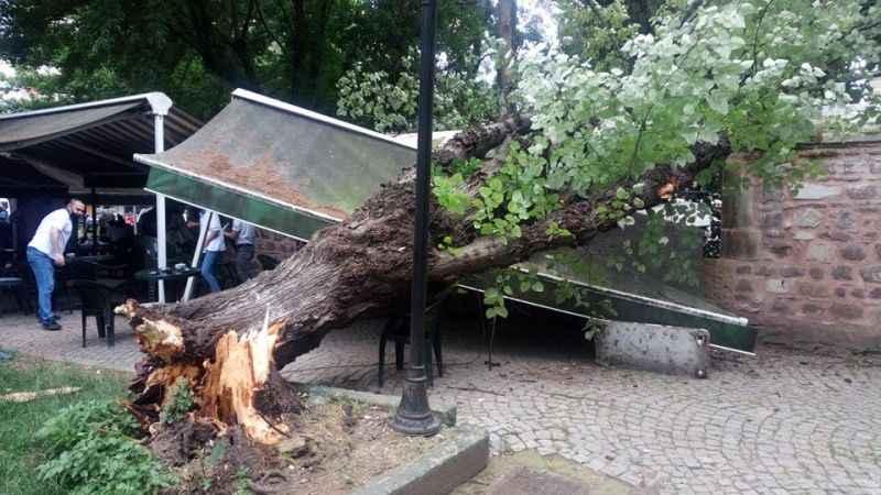 Yeni Cuma'da vatandaşların üzerine ağaç devrildi