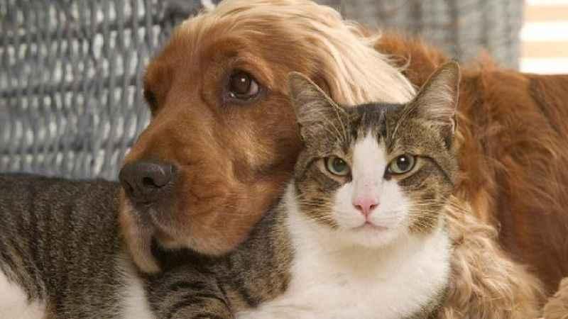 Hayvanların korunmasına ilişkin kanun teklifi kabul edildi