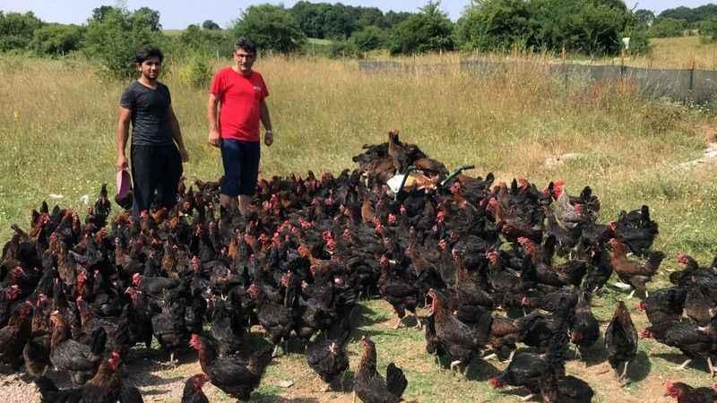 Büyükşehir'inyüzde 50 hibeli tavuk desteği çiftçilerin yüzünü güldürüyor