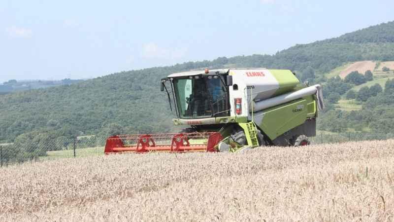 İzmit'te hasat günü! 5 çeşit tohumdan en verimlisi o oldu