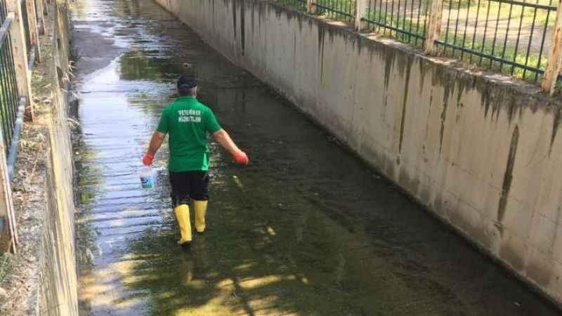 Büyükşehir'den sivrisinekle kapsamlı mücadele