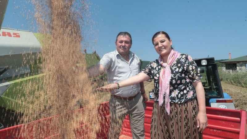 İzmit Belediyesi Nusrat buğday tohumlarını çiftçiye dağıtmaya başlıyor