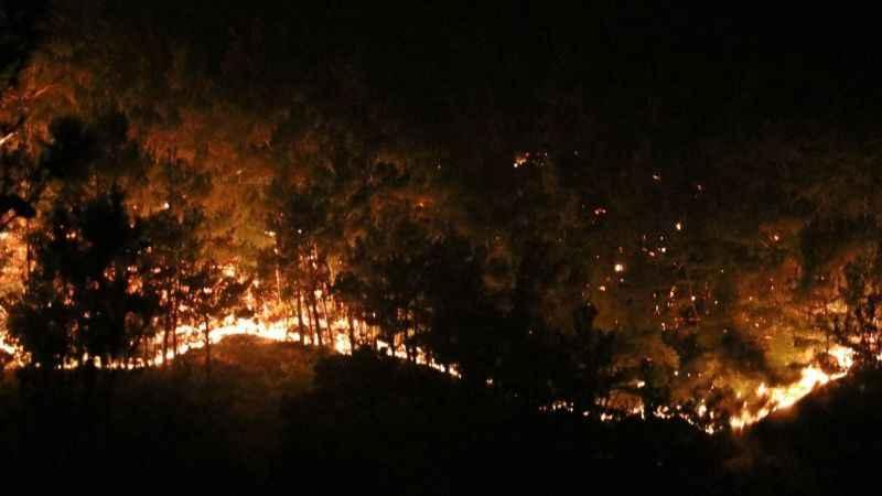 Orman yangınlarını fırsata çevirdiler! Bir günde yüzde 633 zam...