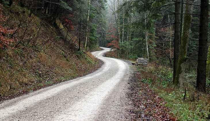 Orman yolu yaptırılacaktır