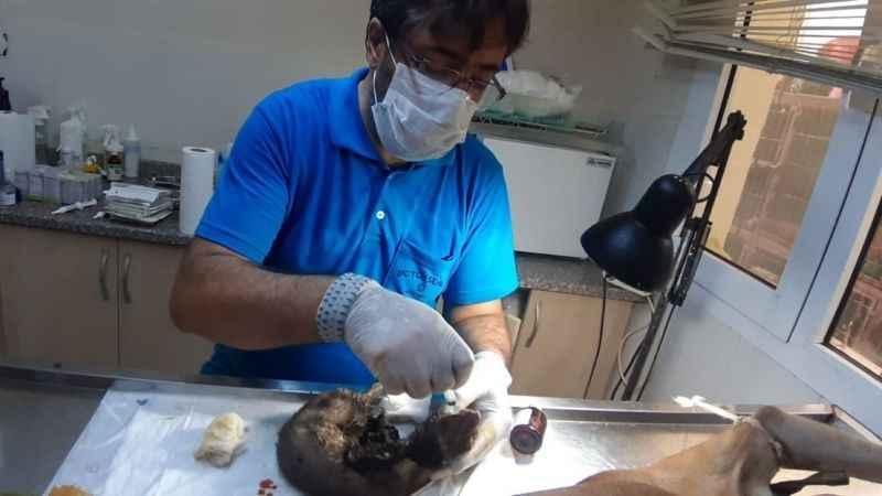 Yangından etkilenen hayvanlar Kocaeli ekibi tedavi ediyor