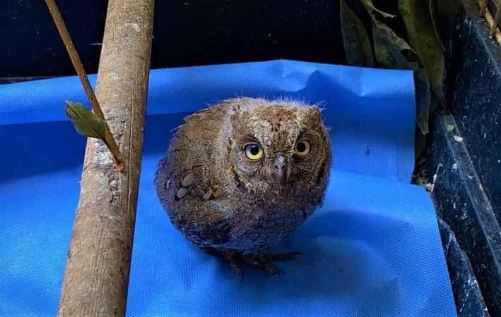 Yuvasından düşen yavru ishak kuşu, yeniden doğaya salınmaya hazırlanıyor