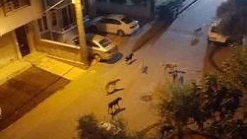 Yenişehir'de köpek sorunu var! Mahalleli tedirgin