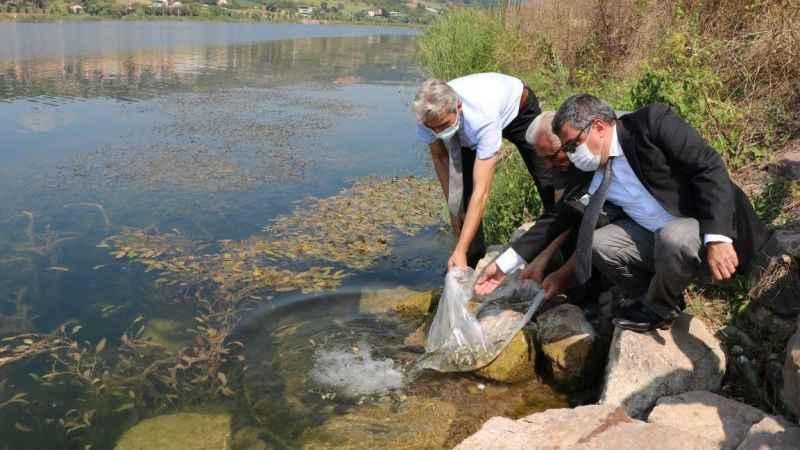 Kocaeli'de göletlere 171 bin sazan balığı bırakıldı