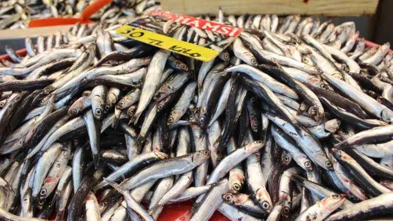 Balık sezonu başladı! İşte fiyatlar...