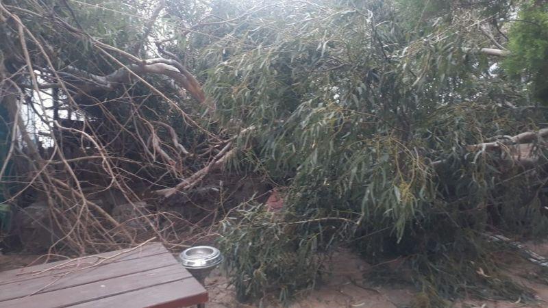 Fırtına ağaç dallarını kırdı