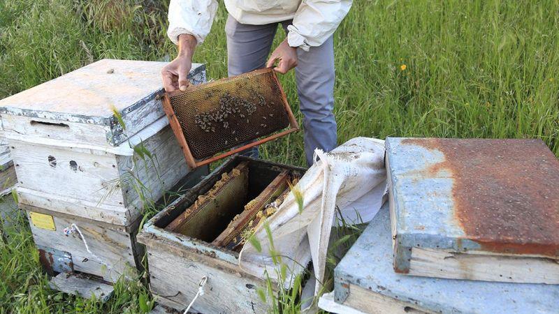 Milas'ta arı kovanı hırsızlığı...