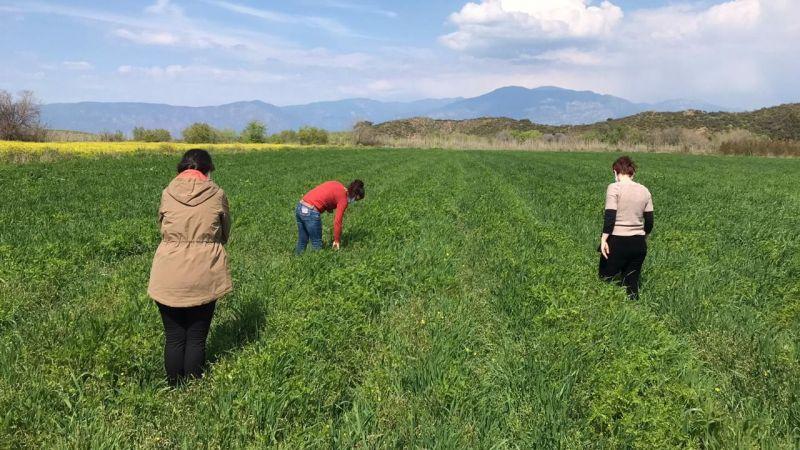 Muğla'da üç ayrı projeyle yem bitkisi üretimi artıyor…
