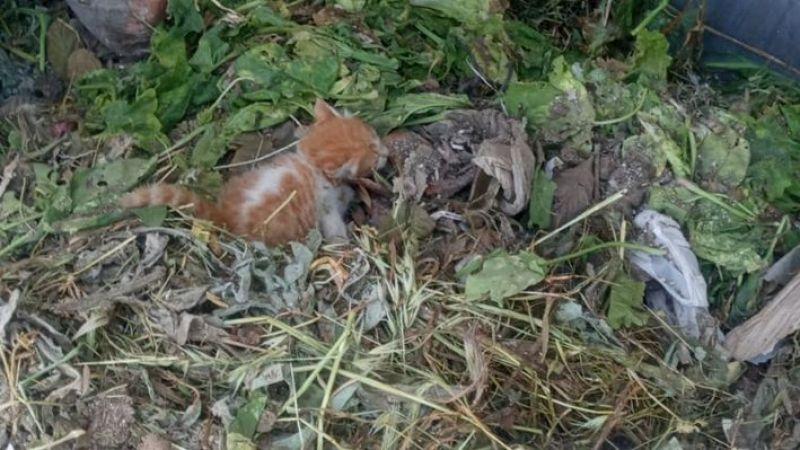 Çöp konteynerine bırakılan yavru kedi kurtarıldı