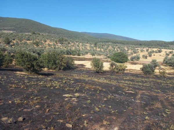 Milas'ta tarım arazisinde yangın