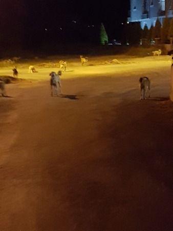 Sokak köpekleri saldırdı, hastanelik oldu