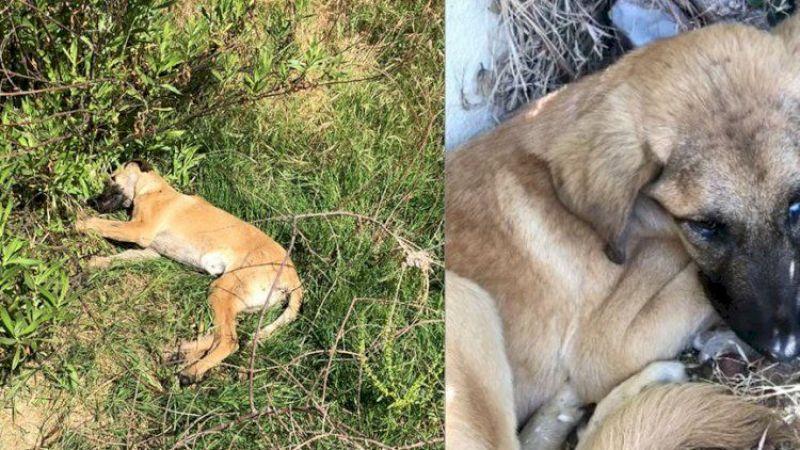 Köpekler zehirlenerek öldürüldü