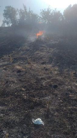 Zeytinlik ve makilik alanda yangın