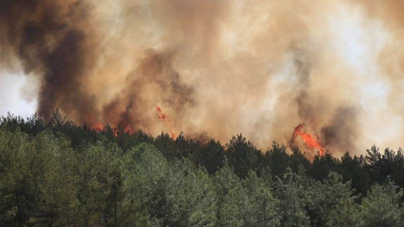 Milas'ta orman yangını başladı