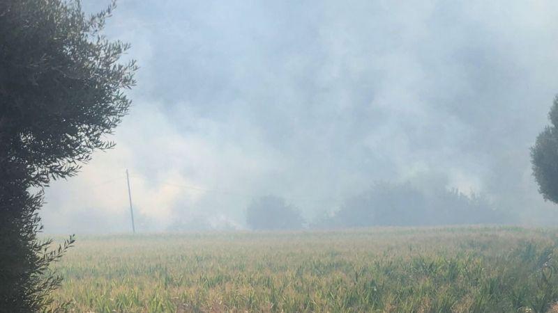 Milas'ta tarim arazisinde yangın başladı