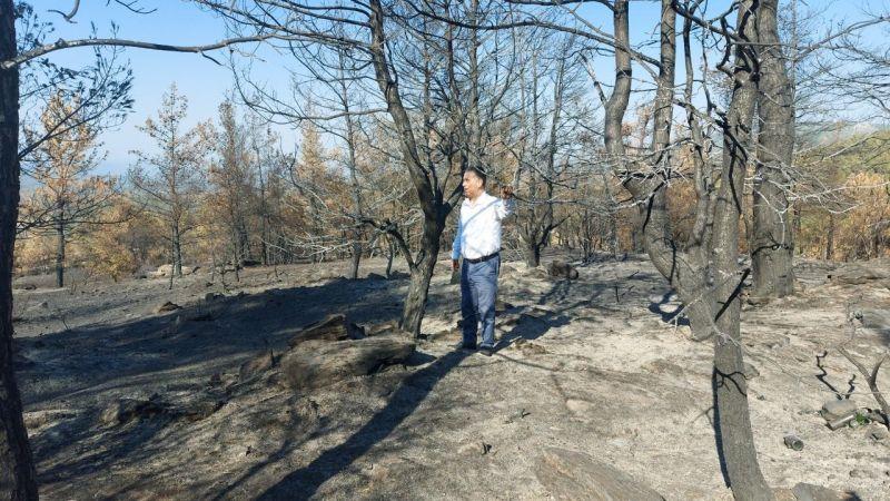 CHP'li Özcan'dan orman yangınları ile ilgili 41 soru