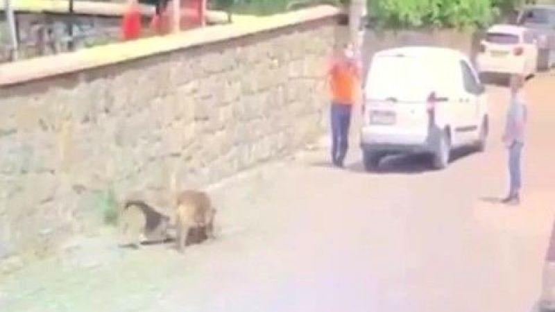 Yolda yatan köpeğin üzerinden aracıyla geçti