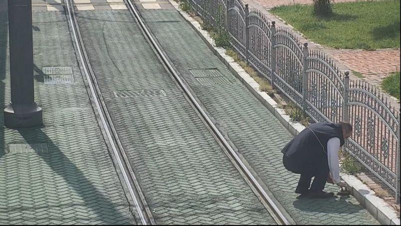 Mahsur kalan kaplumbağanın yardımına vatman koştu