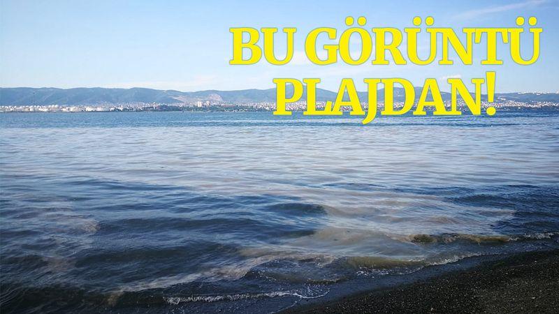 Kocaeli'deki o plaj, deniz salyası ile kaplandı