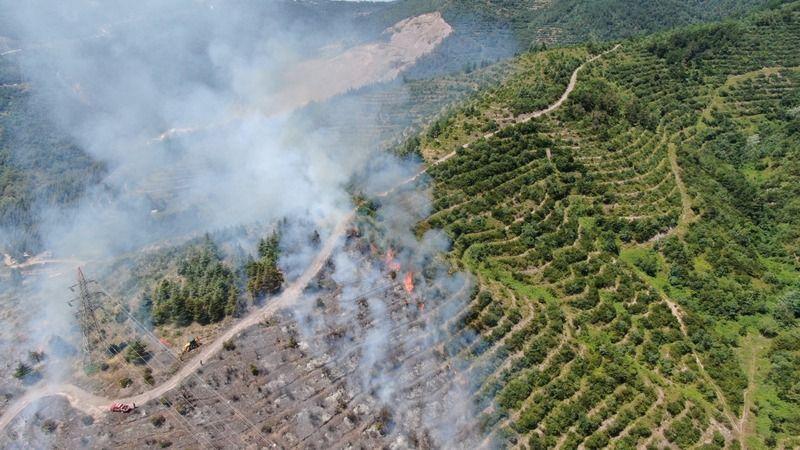 Kocaeli'de orman yangını çıktı!