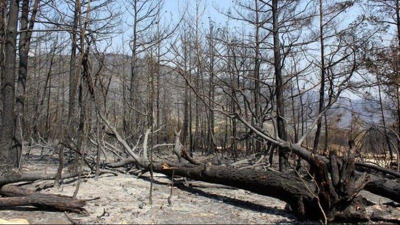 İşte orman yangınlarının Türkiye'ye faturası