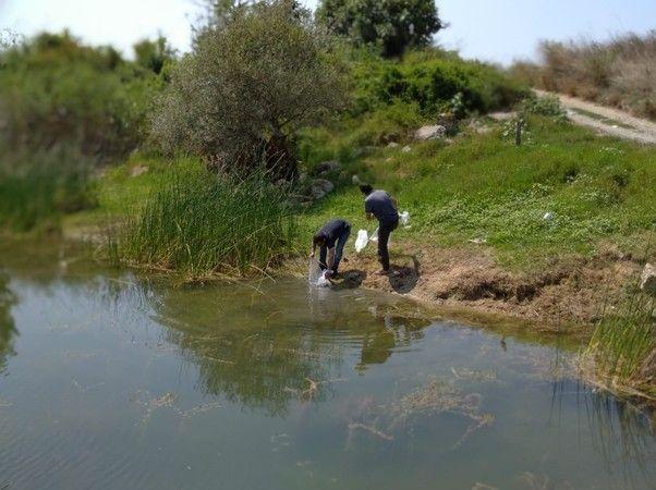 Kocaeli'de göletlere 171 bin sazan bırakıldı