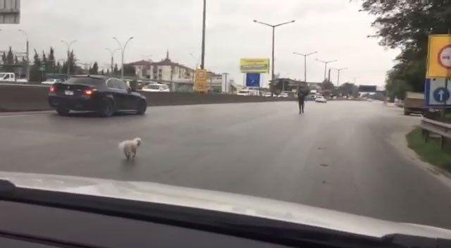 D-100'e kaçan köpek, trafiği alt üst etti
