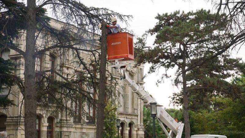 Kent merkezinde tehlike arz eden  ağaçlar için önlem alıyor