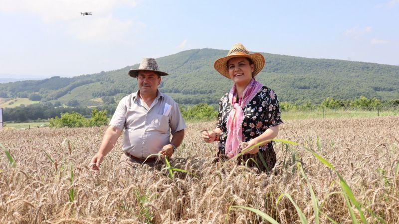 Kocaeli Haber - İzmit'te Ekilen Yerel Buğdayların Hasadı Yapıldı