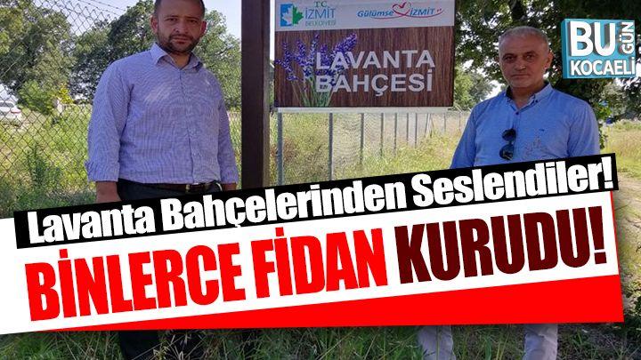 """Tutuş ve İnce, İzmit Belediyesi'nin kurumuş lavanta bahçelerinden seslendi: """"Havaya saçılan tohum değil, İzmit'in parası"""""""