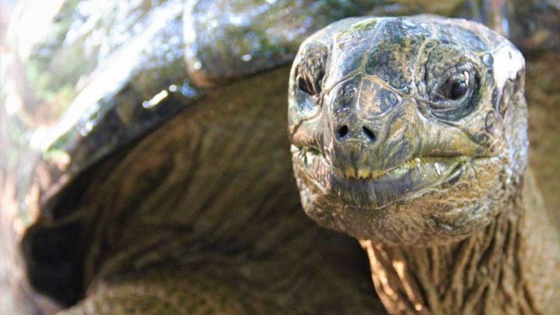 Kocaeli haber - Bu kaplumbağa Cumhuriyet ile yaşıt