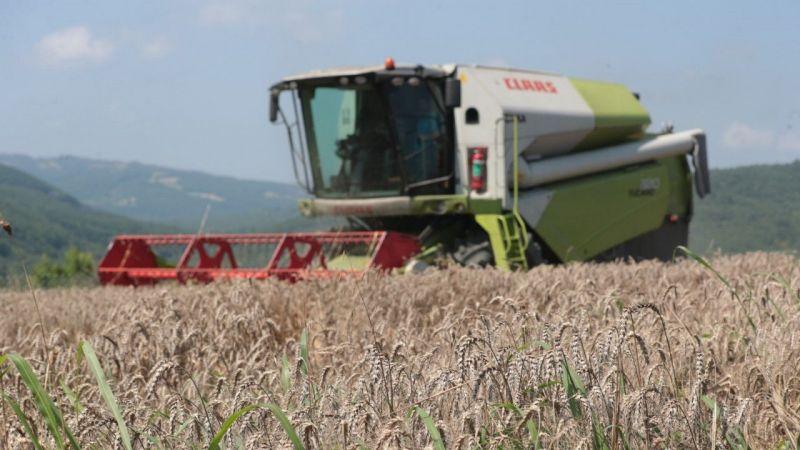 Kocaeli Haber - İzmit Belediyesi Nusrat buğday tohumlarını dağıtmaya başlıyor