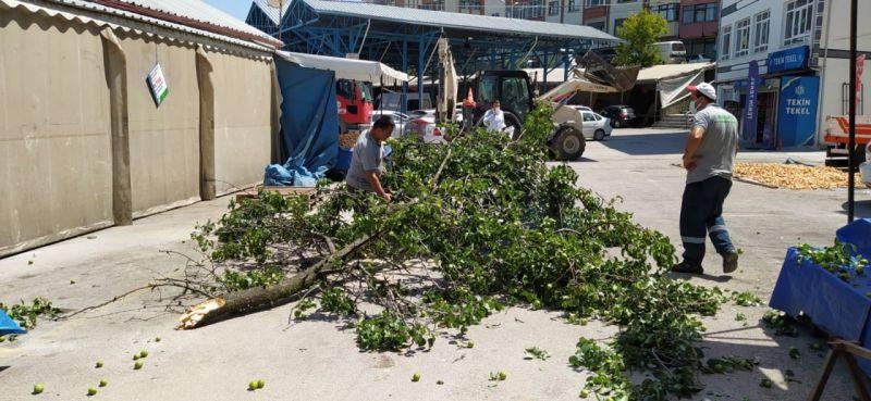 Kopan ağaç dalından tezgahın brandası korudu