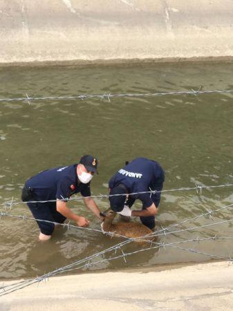 HES kanalına düşen karacayı, jandarma ekipleri kurtardı