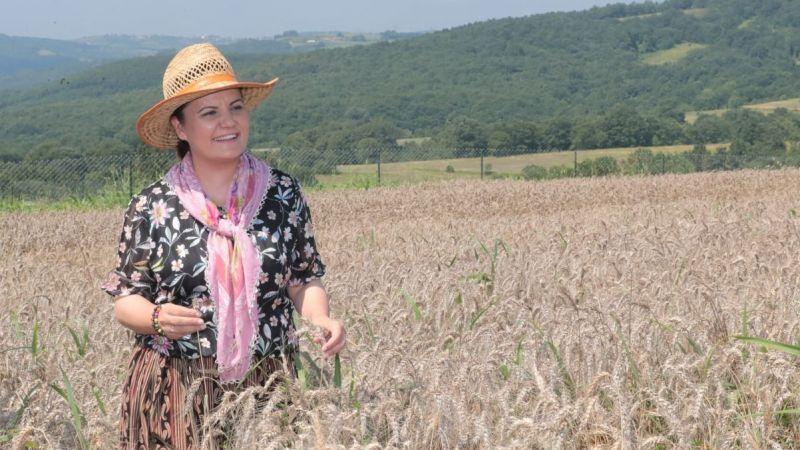 Kocaeli Haber - Nusrat buğday tohumu başvurusu yarın bitiyor