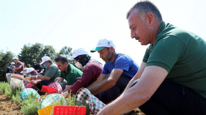 Kocaeli Haber - Kocaeli'de çiftçilerin yeni umudunda ilk hasat yapıldı