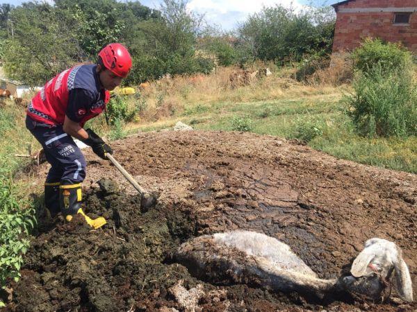 Gübre yığının içine batan eşek, itfaiye ekiplerince kurtarıldı