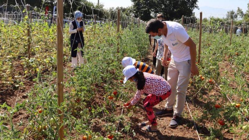 Kocaeli Haber - Tarımsal Üretim Bahçesi'nde  sebzeleri çocuklar topladı